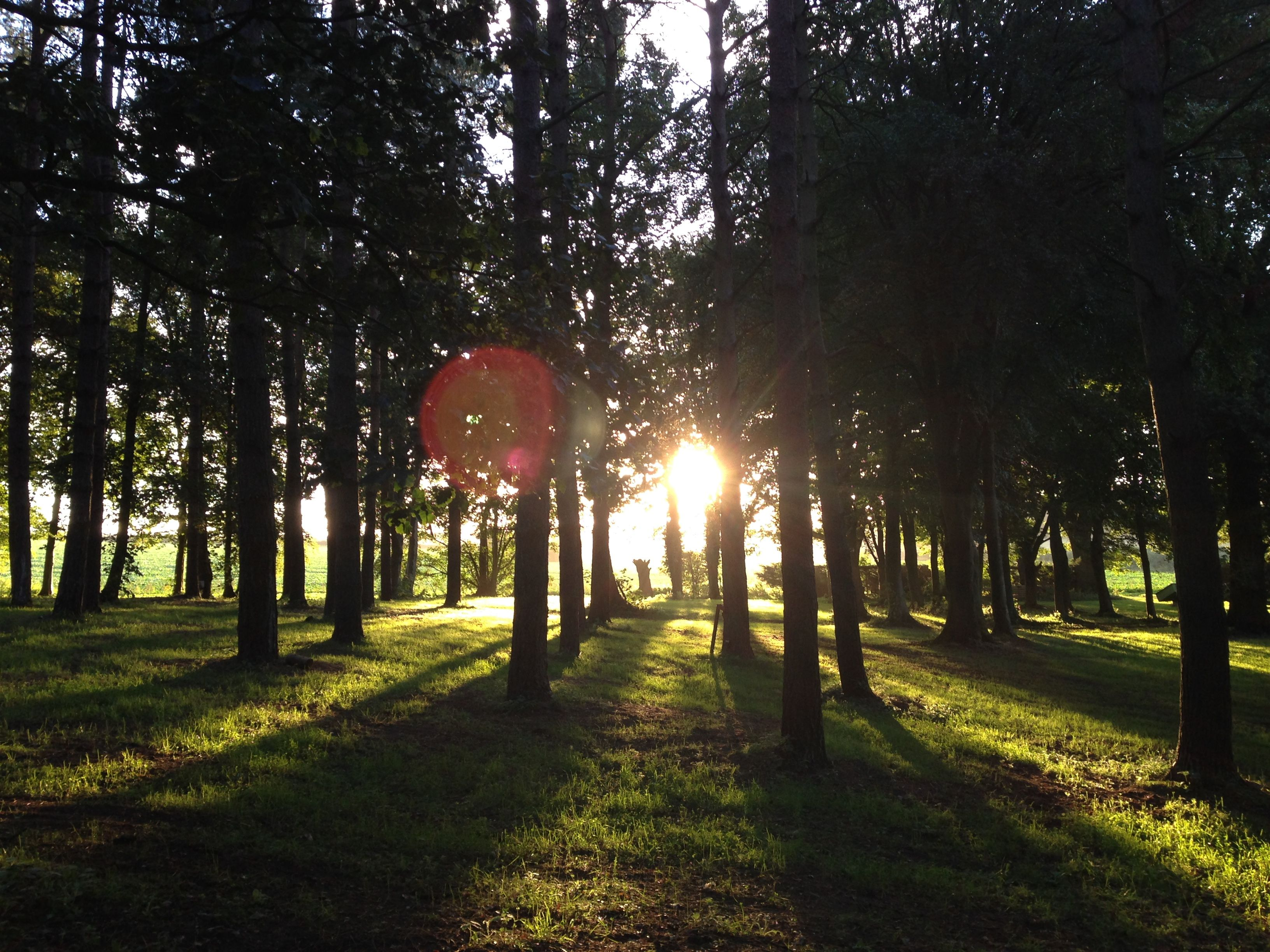 September Sunrise at Happy Valley Norfolk - Woodland Glamping in the Winter  never looked so good. Couples Retreat - Getaway - Escape - Discover - Relax  - Be ...
