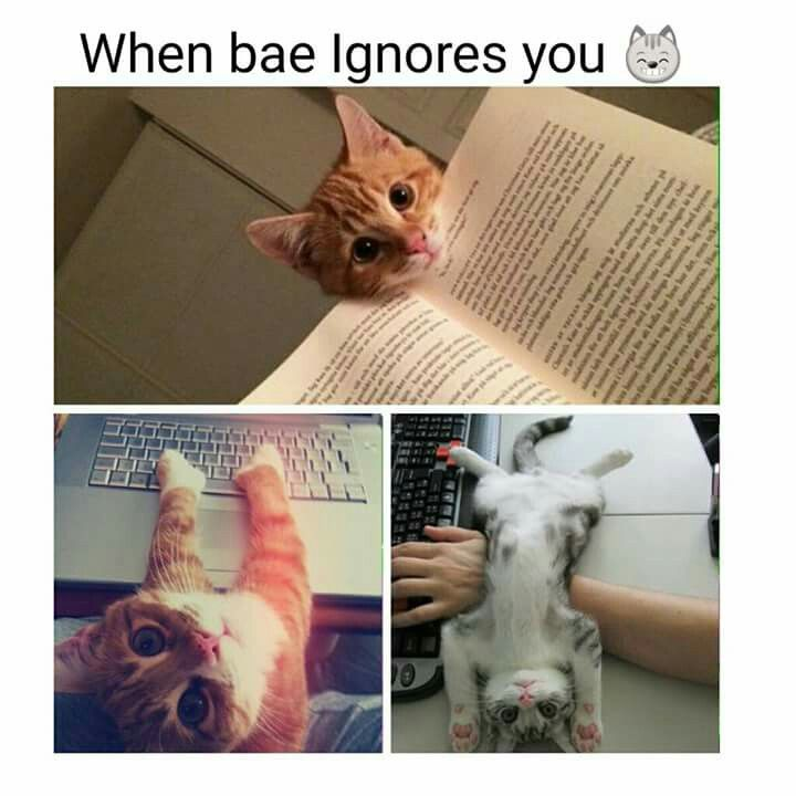 2715c528ab537770b1d96374871554b8 when bae ignores you silly memes pinterest memes, funny,Cat Blanket Meme
