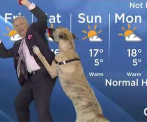 Ein Hund mischt die Wetteransage auf!