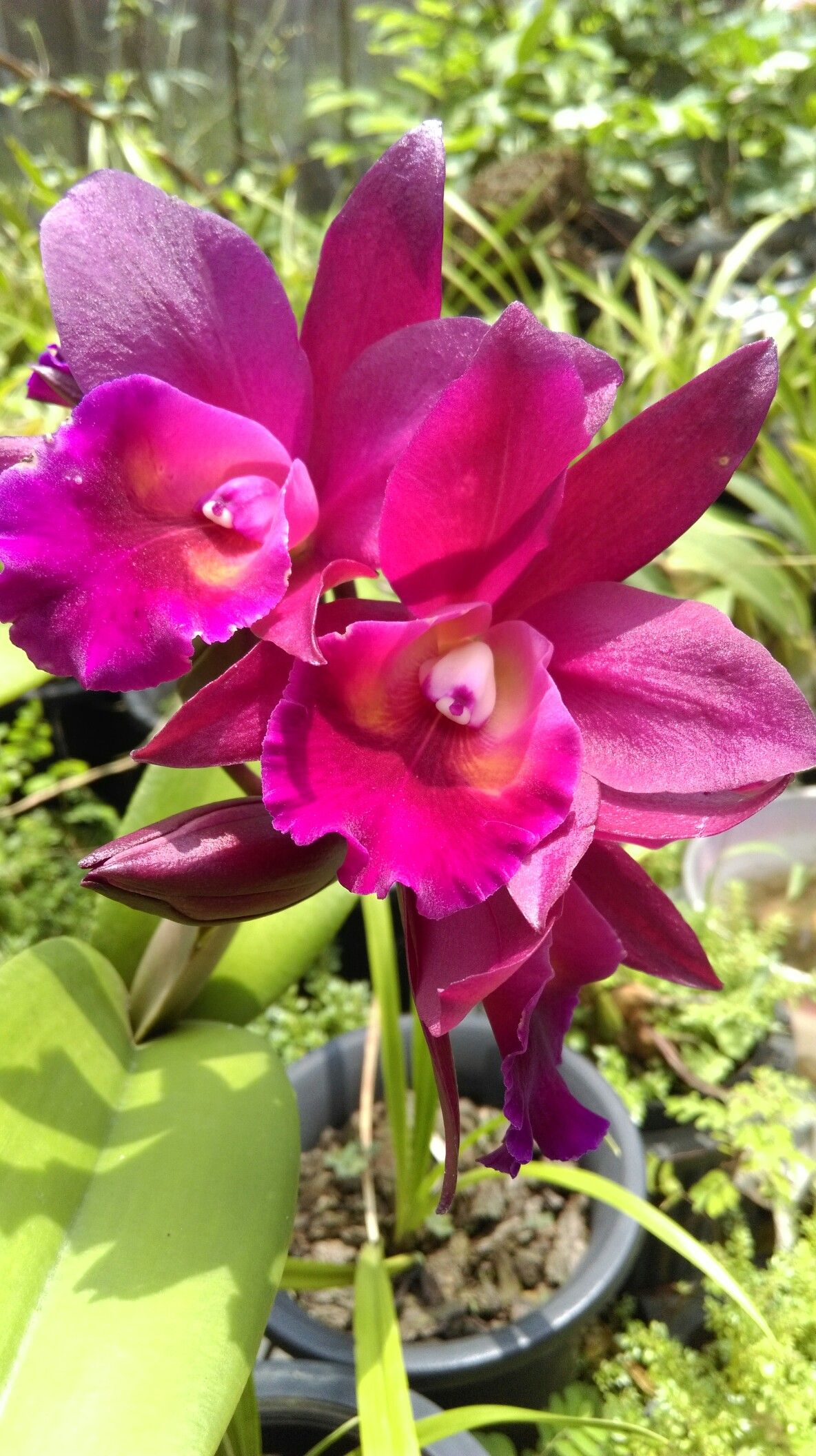 Pin by david ely on orchids pinterest orchid flowers and exotic flowers beautiful flowers unusual plants angel gay wedding orchards calla lilies cactus izmirmasajfo