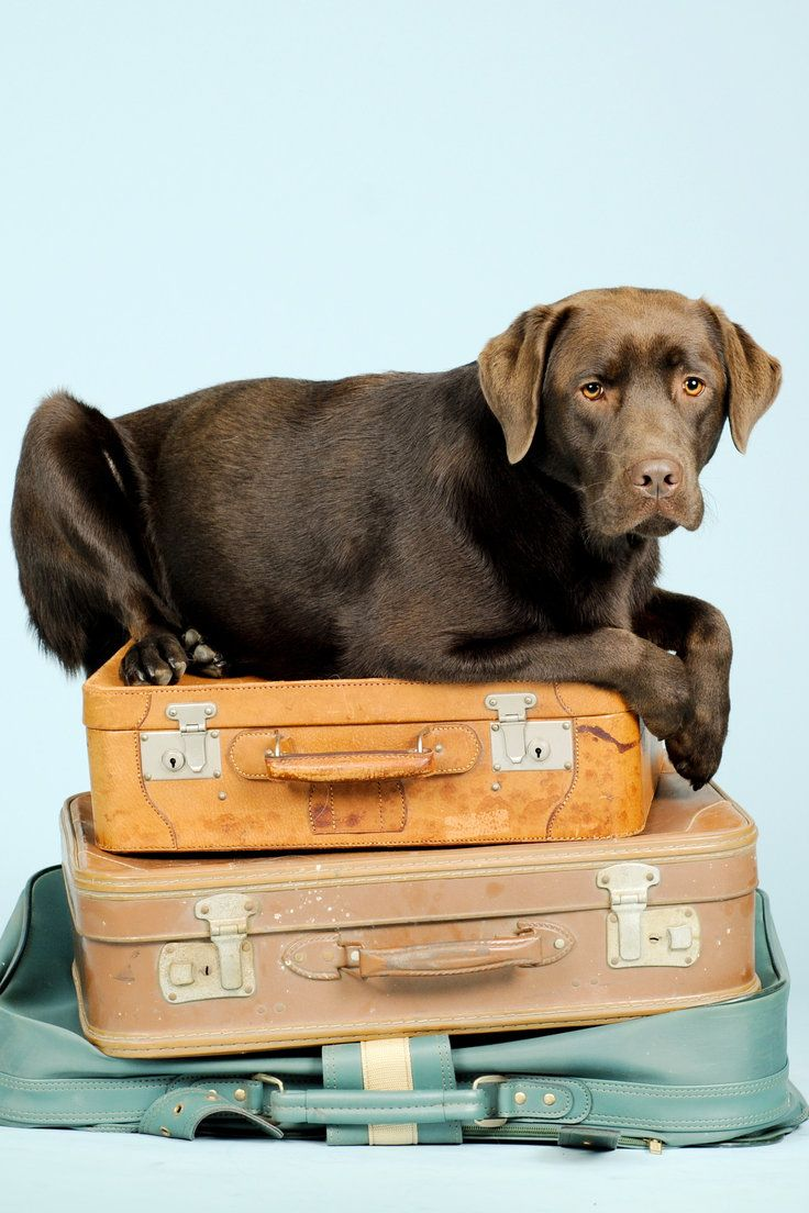 Pet Shipping Companies