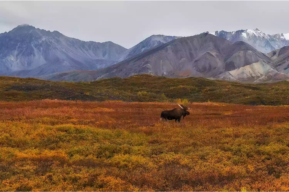 Know the Climate and Wildlife of the Tundra Land Biome   Biomes, Tundra,  Landscape