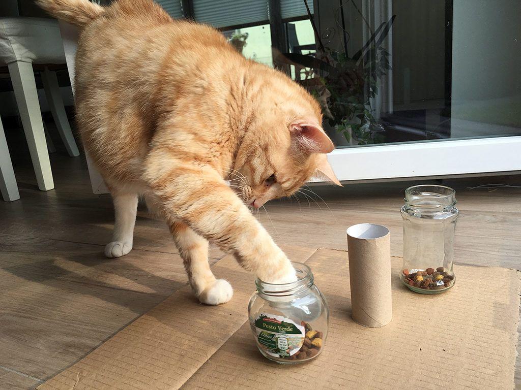 Intelligenzspielzeug Für Katzen Wie Du Ein Fummelbrett Selbst