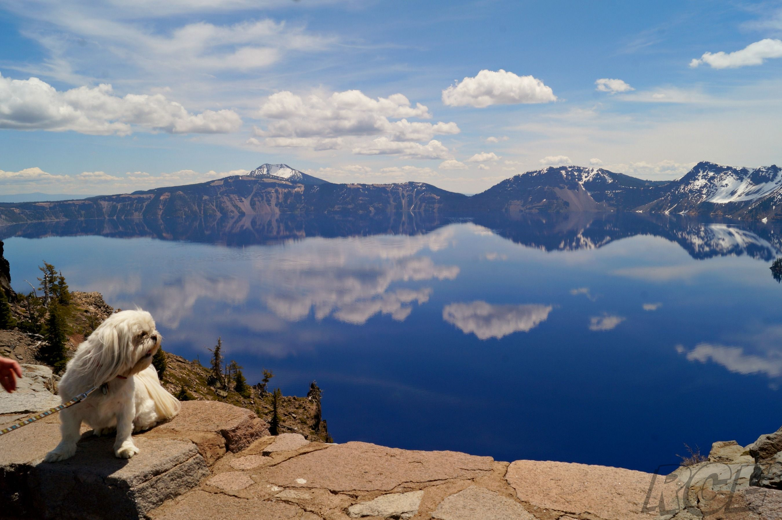 Shih Tzu Puppies Medford Oregon Ideas