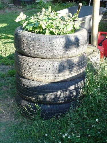 Recycled tyres for vertical potato growing