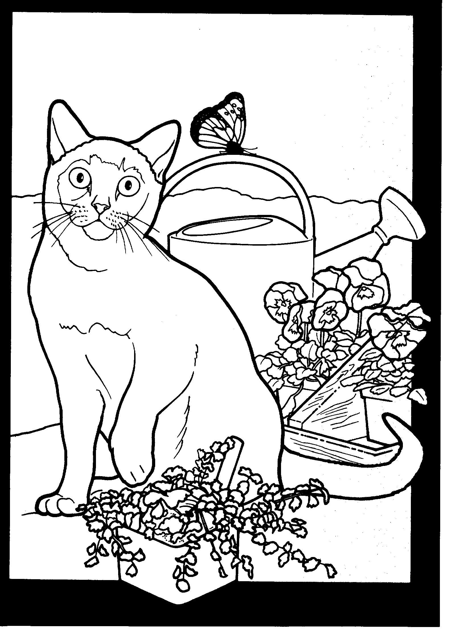 Garden Cat Cat coloring page, Coloring pages, Cat and