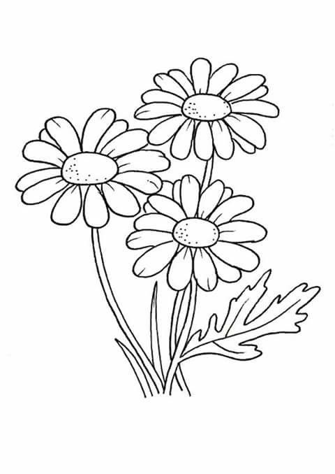 Daisy Or Aster Flower Coloring Pages Coloring Pages Flower Drawing
