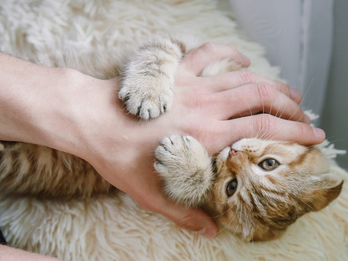 Cat owners know that every feline has its own distinct