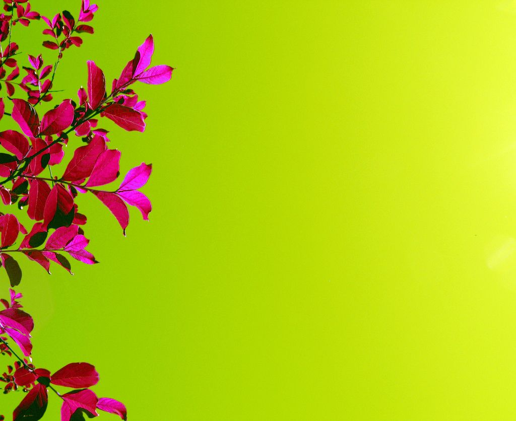 Lime Fuschia Flower Backgrounds Pink Flowers Background