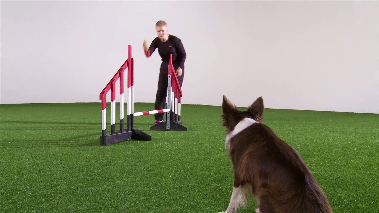 Dog Obedience Training Dog Grooming Problems Buzzfeed