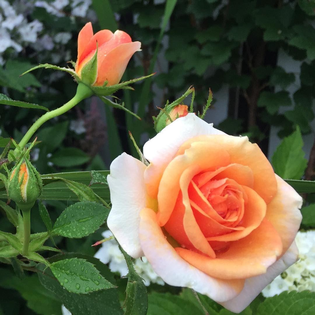 "Good Morning """"""Beautiful Moment #holland #flowers #tullips #roses #garden #landscape#kids#spring#Beautiful#"