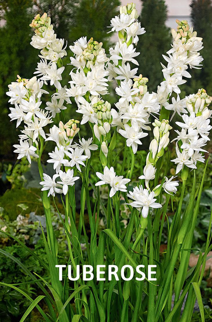 20 Best Beautiful Fragrant Flowers In The World Bulb Flowers Fragrant Flowers Flower Garden