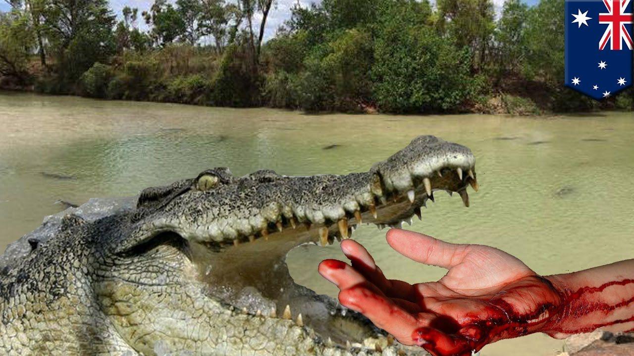 Crocodile attacks: Giant crocodile chomps river wading man ...