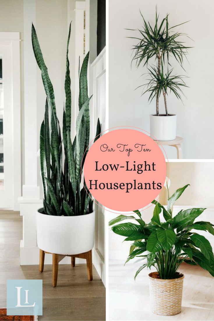 These Indoor Varieties Are Perfect For Gardening Beginners Our Top Ten Low Light Houseplants Thrive In Unexpected Conditions And Super Easy To Grow