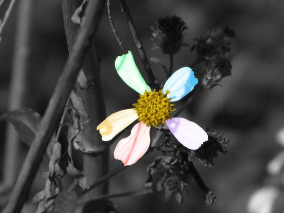 Soft Rainbow Flower  Black and White  Color by PrintsbyLuciaJade