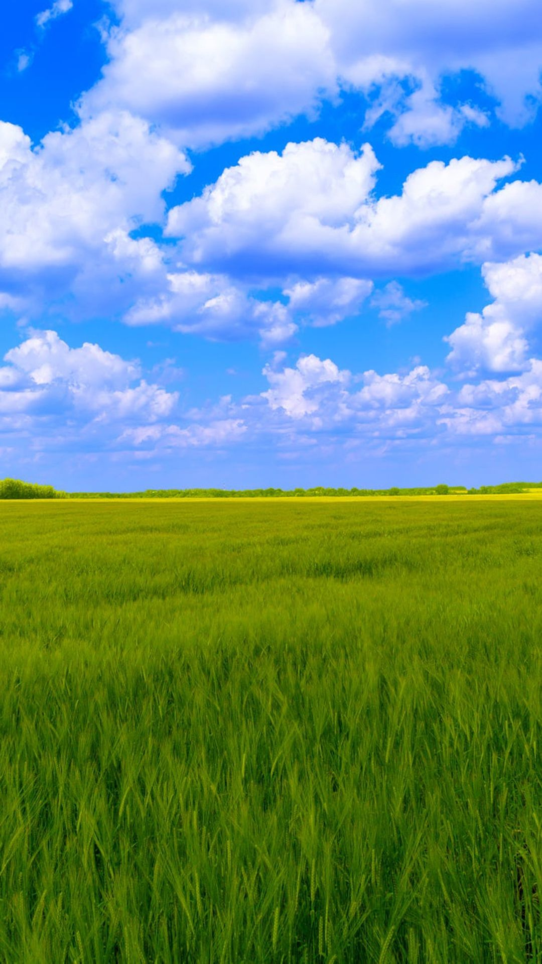 Blue Sky White Clouds Green Grass Backgrounds Green Grass Background Grass Wallpaper Grass Background