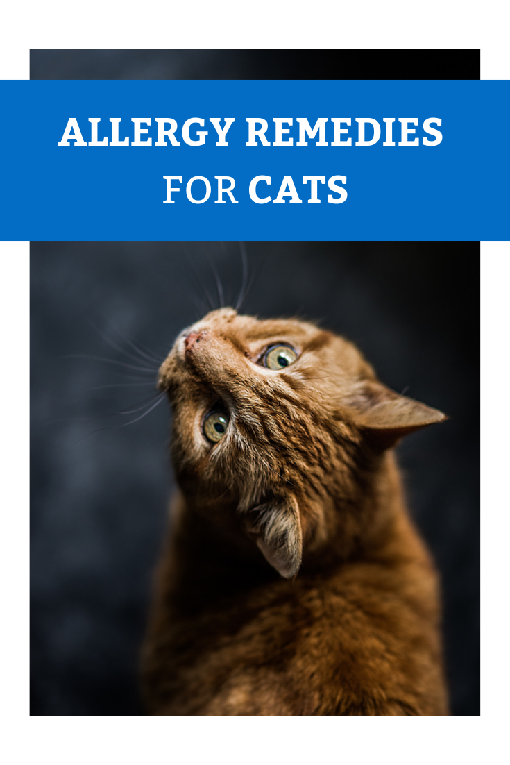 What Can I Give My Cat For Allergies Canna Pet Cat Names Animal Books Cat Allergies