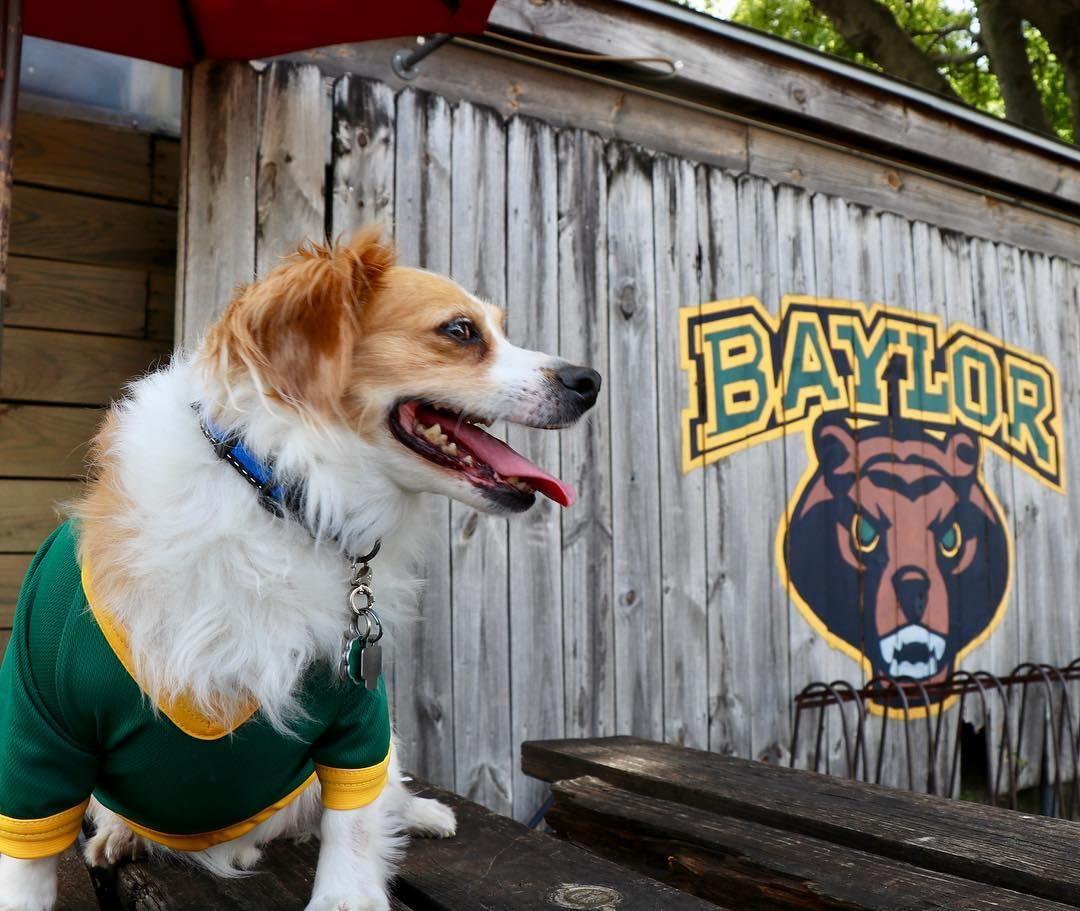 the best attitude 692c2 13e2f Baylor gear for dogs 🐶 | Baylor Pets | Baylor university ...