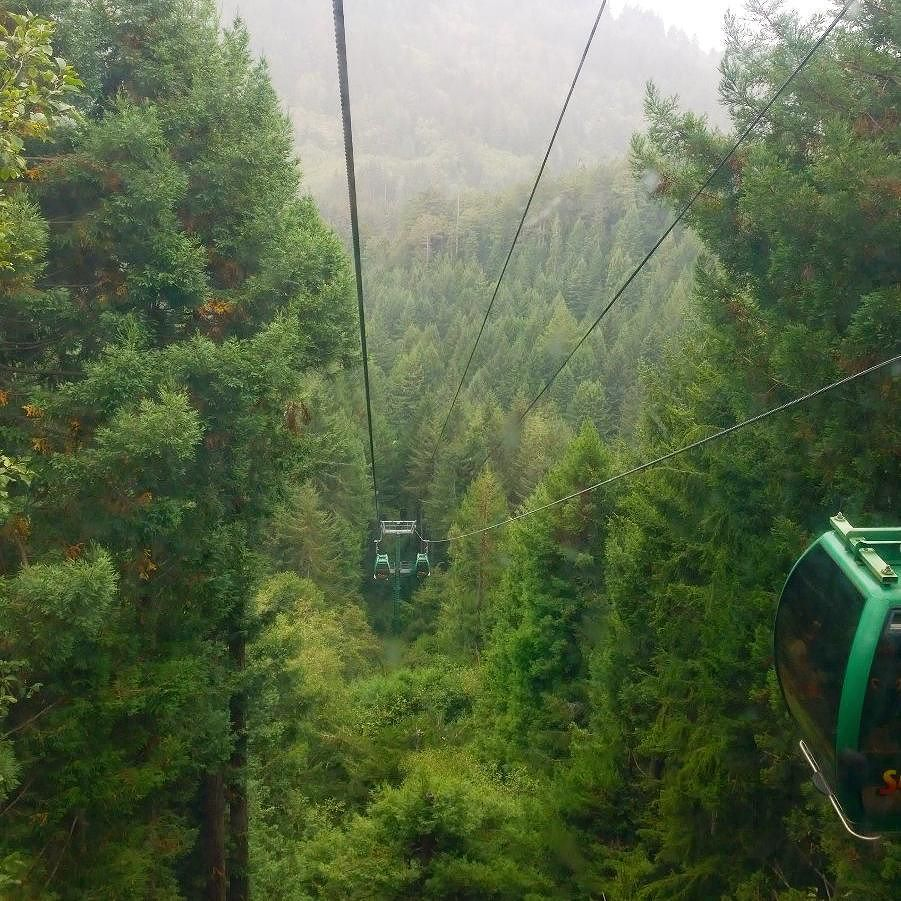 Trees of Mystery is super touristy and worth every penny of the $15 fee. First you walk through the park to see all of the old and tall redwoods cedar spruce etc. Then take a 7 minute gondola ride through the trees to the top of the mountain.  #traveling #travel #igtravel #instatravel #redwoods #cali #roadtrip