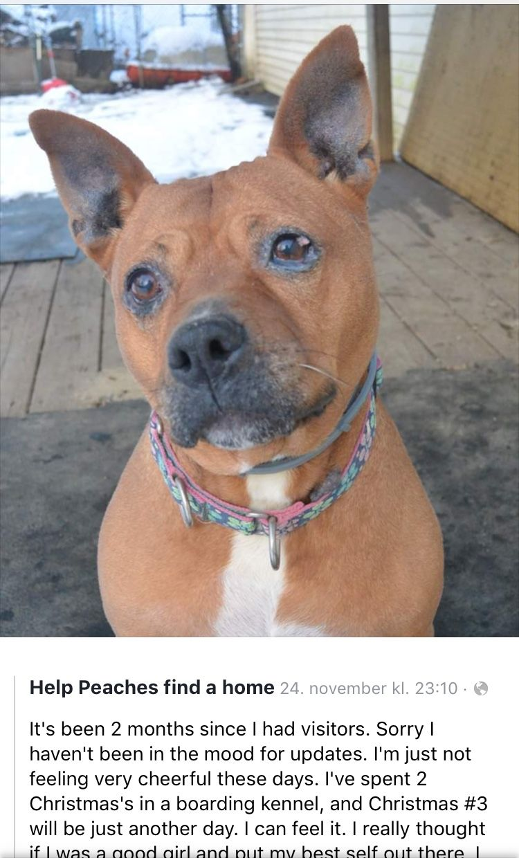 Pin By Esther Sublett On We Found Love Adopted Or Rescued Animal Shelter Animals Pets