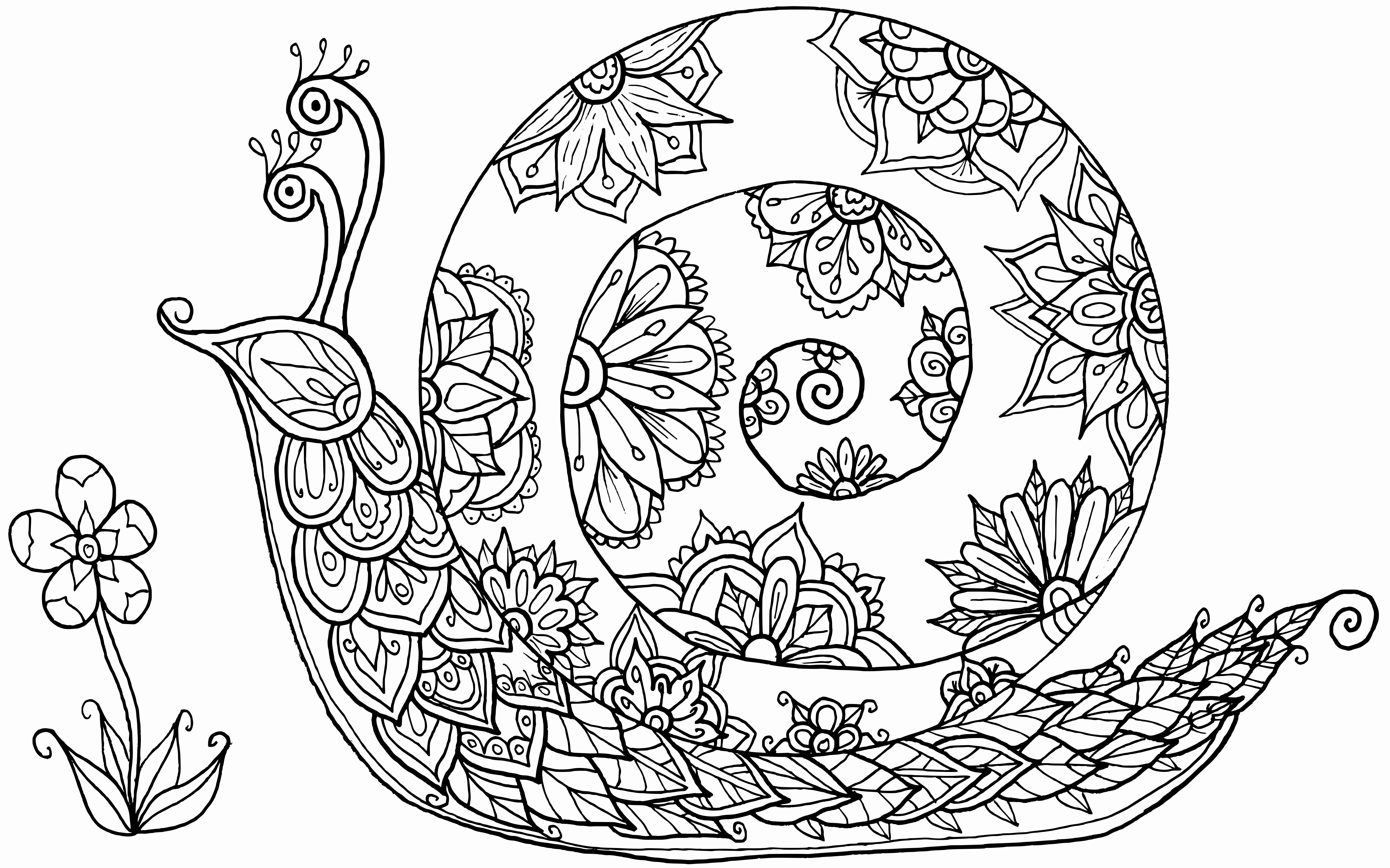 James Monroe Coloring Page Unique Snail Doodle By Del Angharad