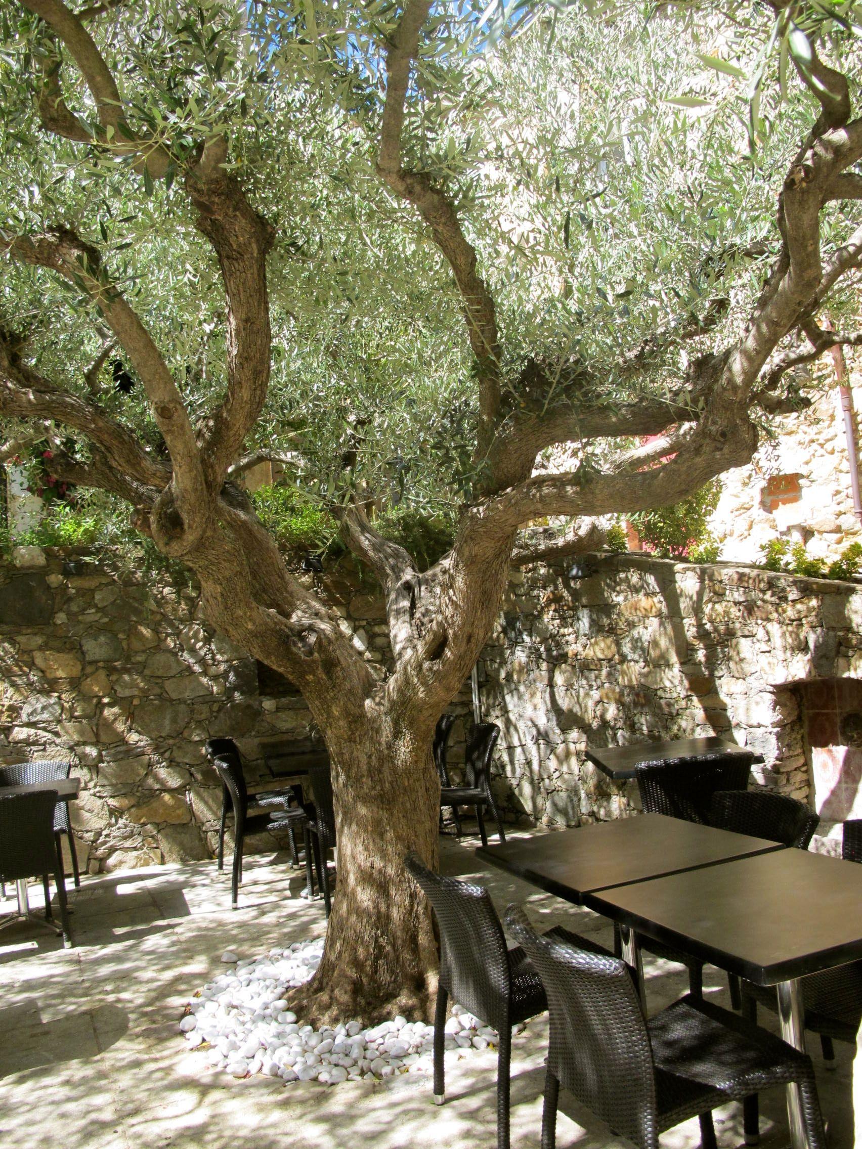 Port Grimaud, France. French Hilltop Village, Olive Trees