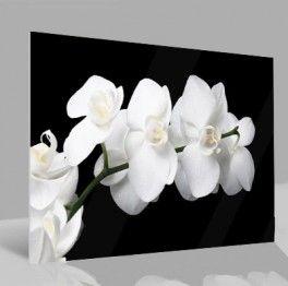 25 glasbilder pinterest. Black Bedroom Furniture Sets. Home Design Ideas