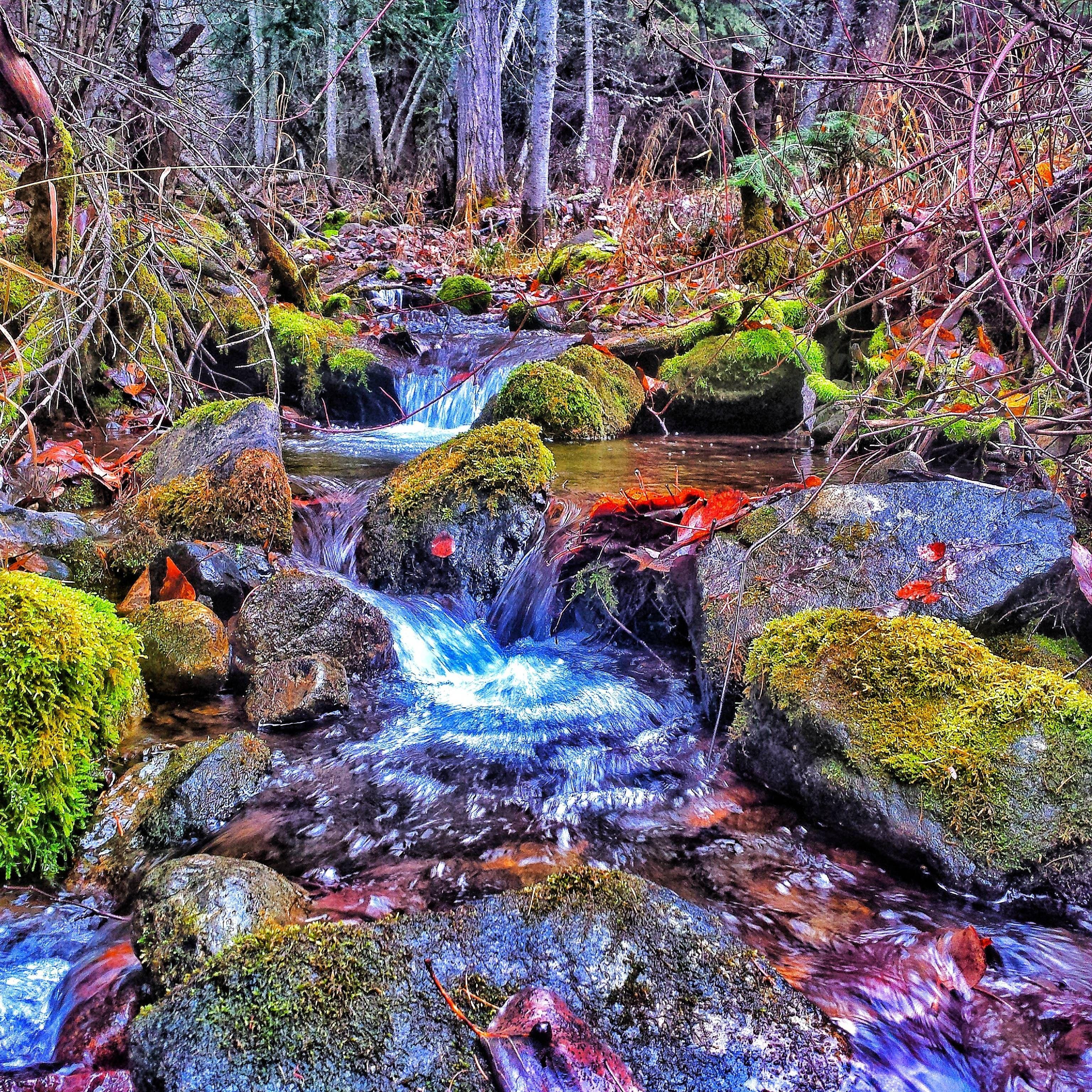 Salmon Creek Eastern Oregon 3072x3072 Eastern Oregon Salmon Creek Oregon