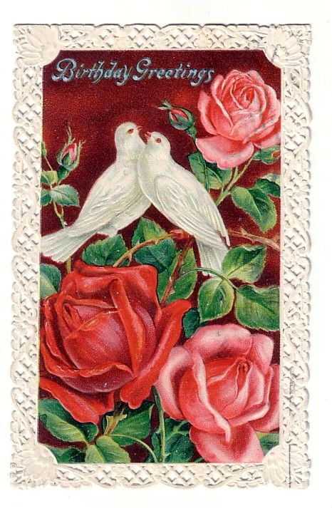 Vintage Birthday Greeting Postcard Embossed Rose's with Doves and Lace Edge