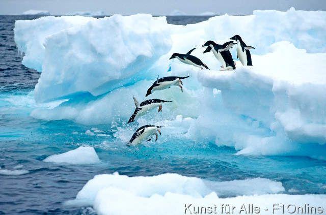 Adelie-Pinguin, Tauchen, Antarktis-Halbinsel, Antarktisch