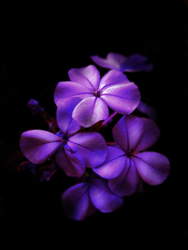 purplish flowers