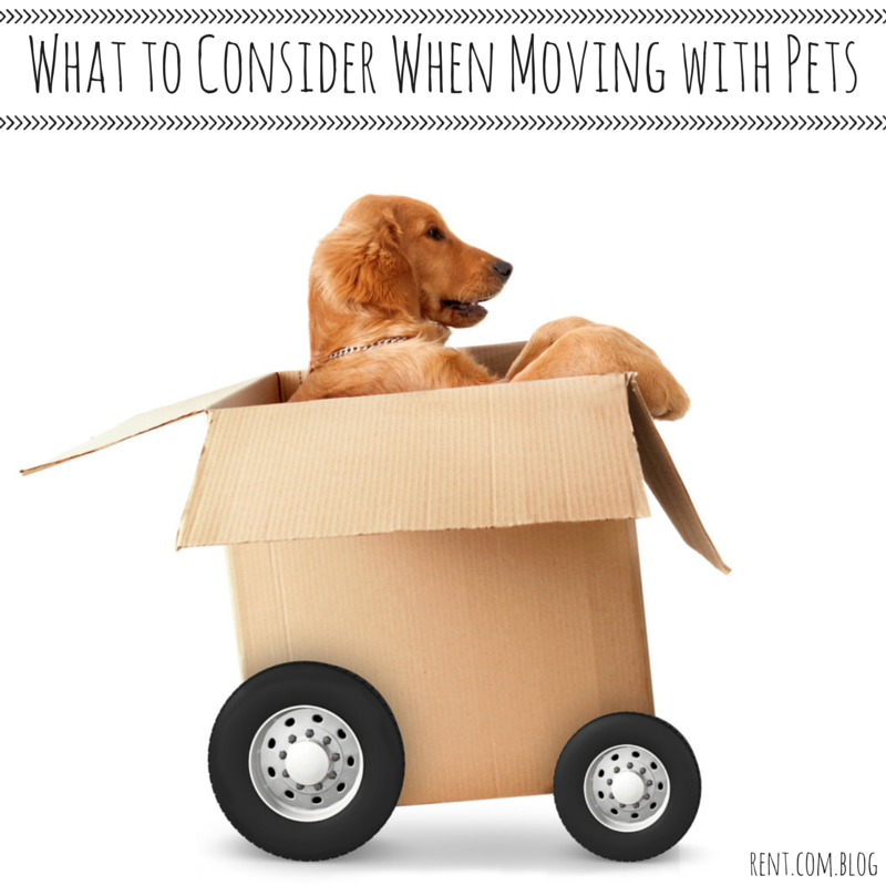 Moving Tips What To Consider When Moving With Pets Moving Tips Moving House Moving Day