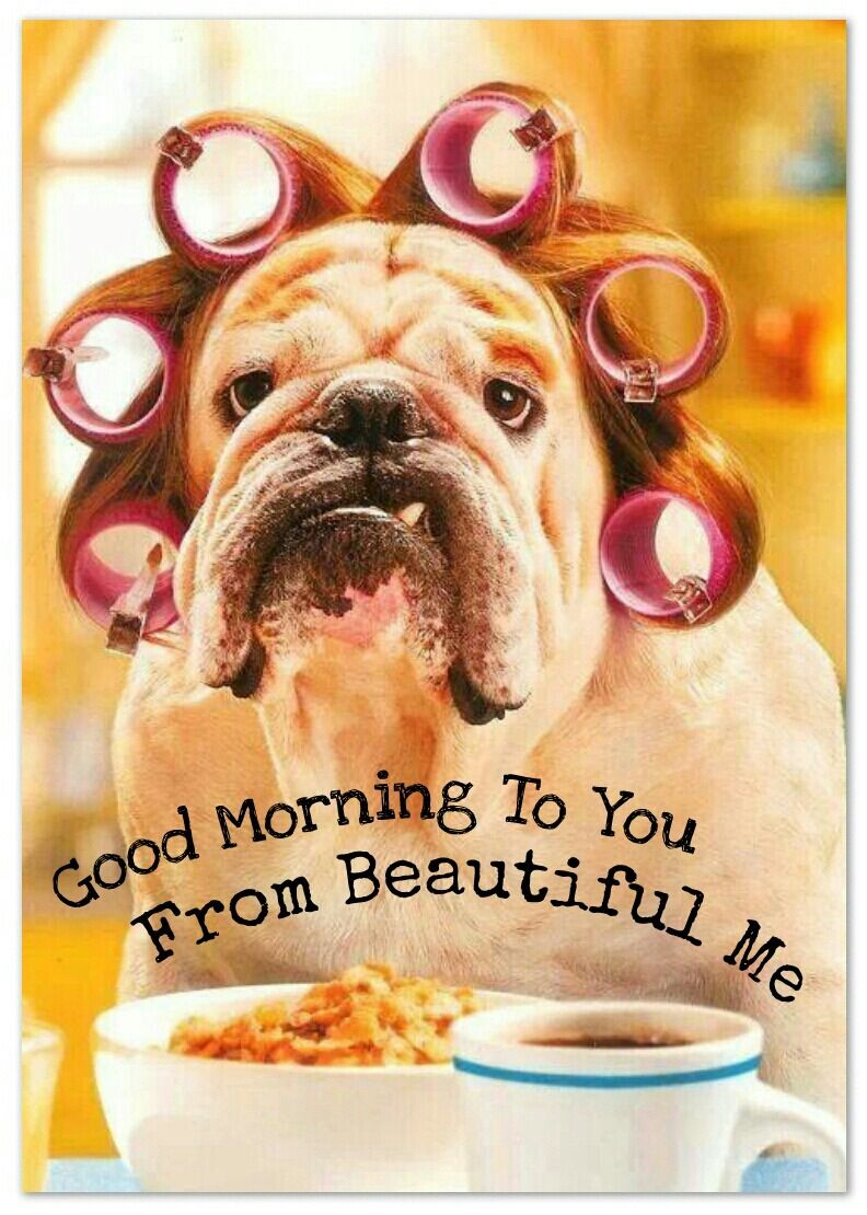 Morning Good Morning Dogs Funny Dogs Animals