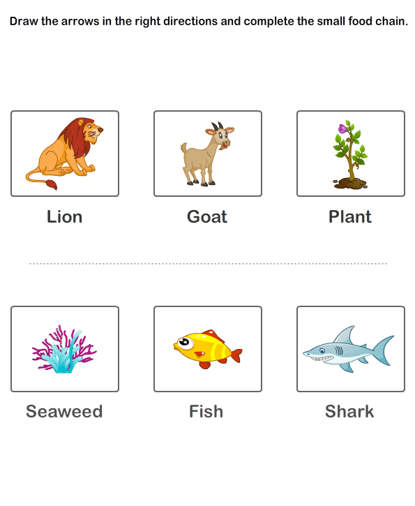 Worksheet Food Webs For Kindergarten Students free 2nd grade science worksheets food chain educational for kids