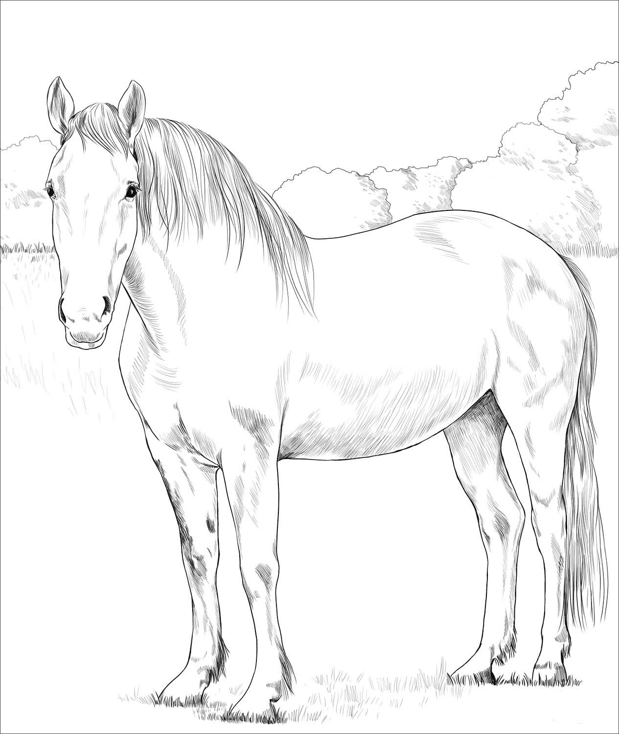 Irish Draught Horse Coloring Page Horse Coloring Horse Coloring Books Animal Coloring Pages