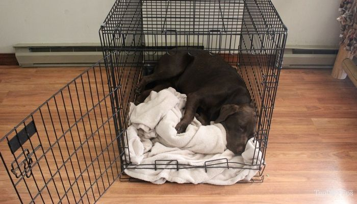 How To Crate Train A Dog Dog Training Dog Crate Crate Training