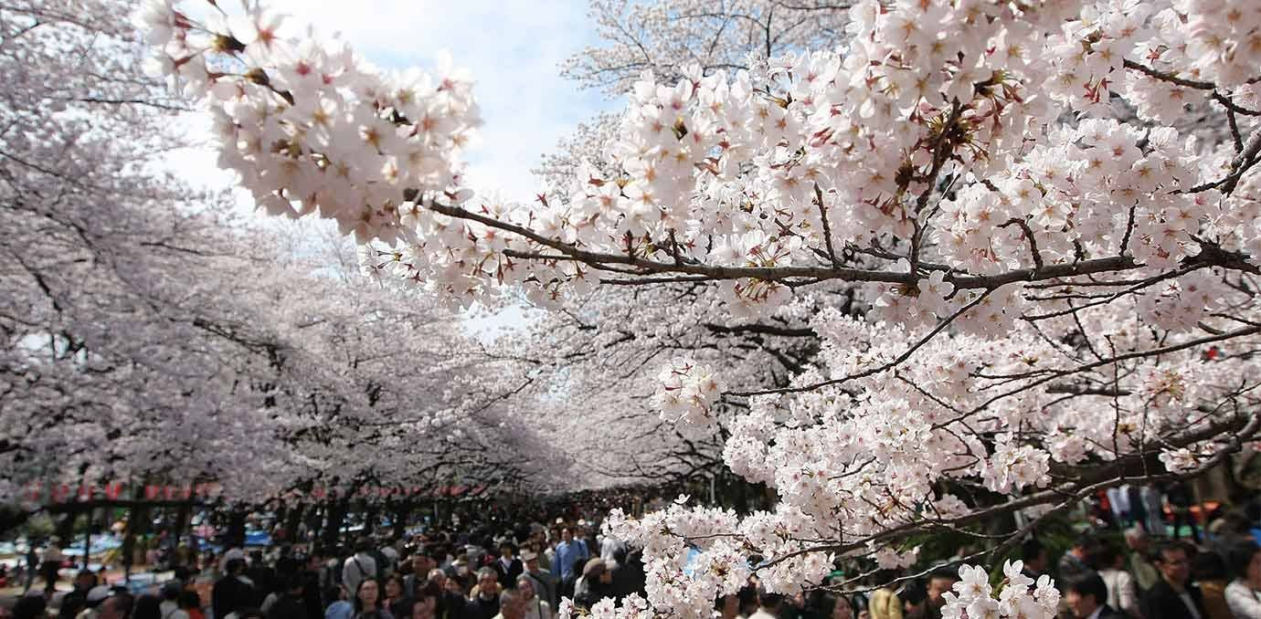 10 Of The World S Most Beautiful Places In Bloom World Most Beautiful Place Most Beautiful Flowers Most Beautiful Places