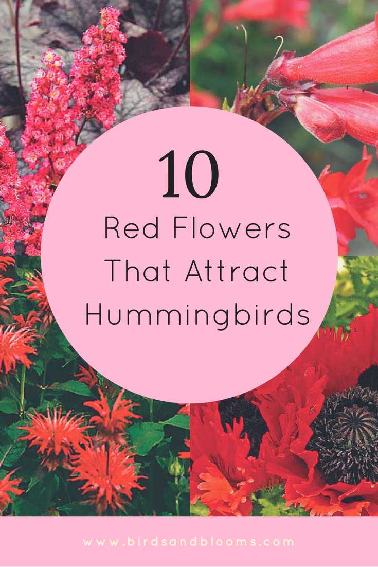 10 Red Flowers That Attract Hummingbirds How To Attract Hummingbirds Hummingbird Garden Flowers Flowers That Attract Hummingbirds