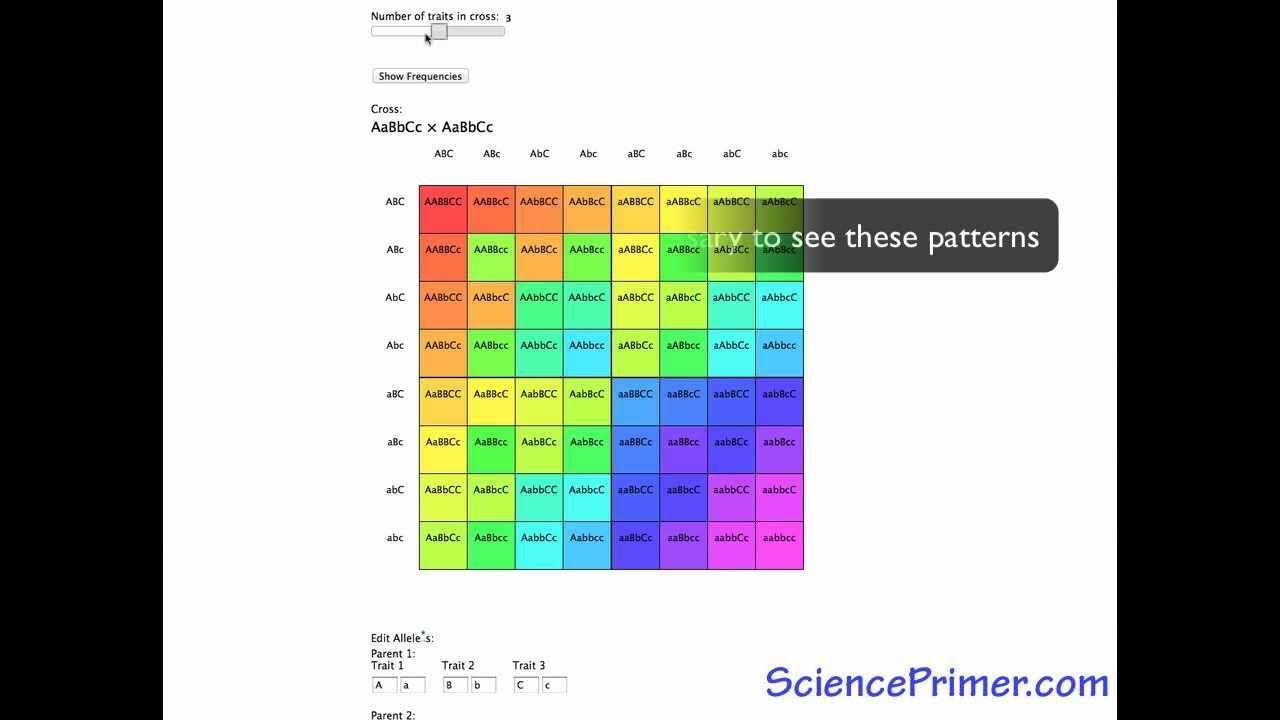 Punnett Square Calculator Overview Steam Pinterest Diagram