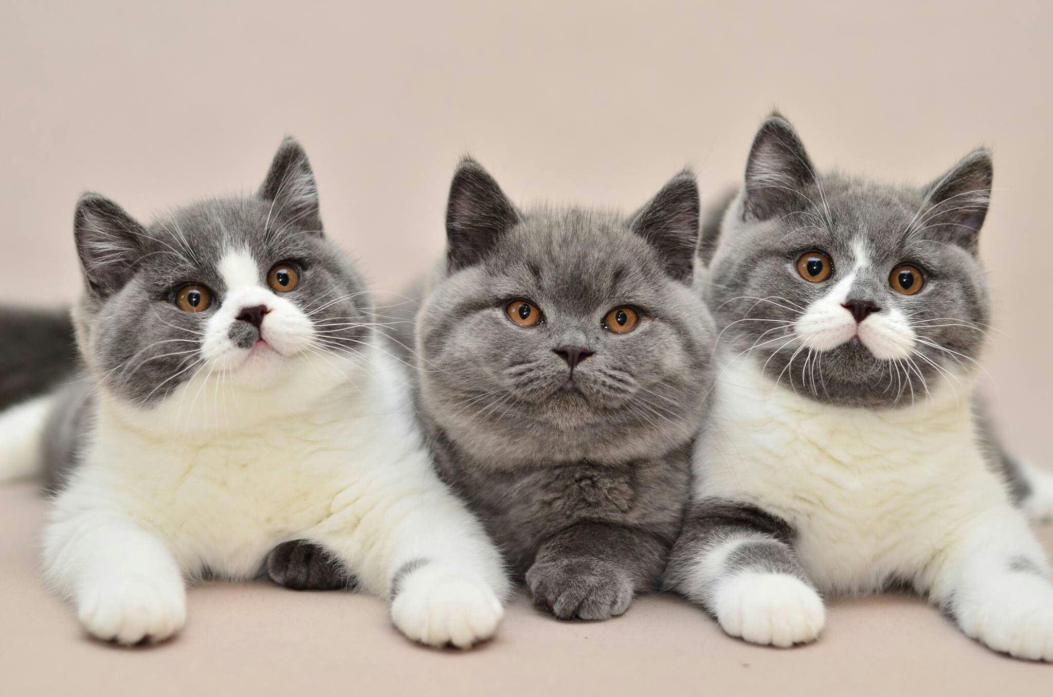 What Are We Going To Do Next Kittens Cutest Cute Cats Pretty Cats