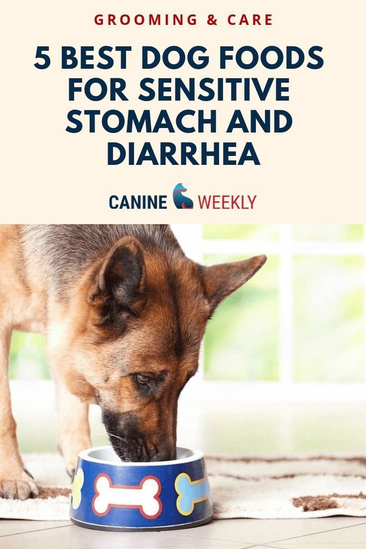 5 Best Dog Foods For Sensitive Stomach And Diarrhea 2020 Best