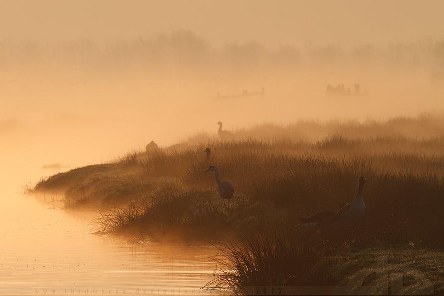 Layered Morning by thrumyeye on DeviantArt