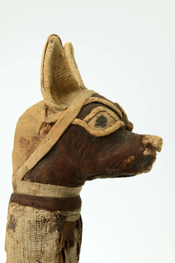 A jackal mummy which will be on display at World Museum Liverpool
