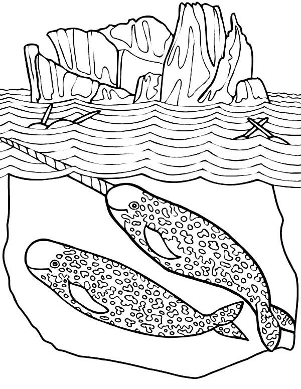 Pin oleh NetArt di Narwhal Coloring Pages