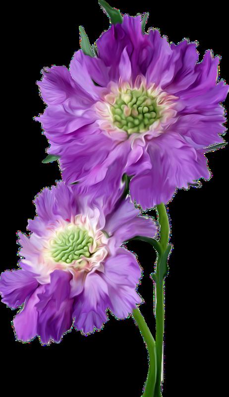 fleurs,flores,flowers,bloemen,png | Kwiaty transparent ...