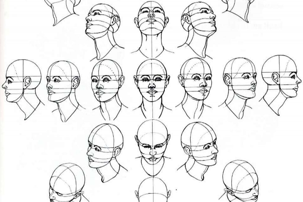 image result for male face proportions human proportions jan 2018