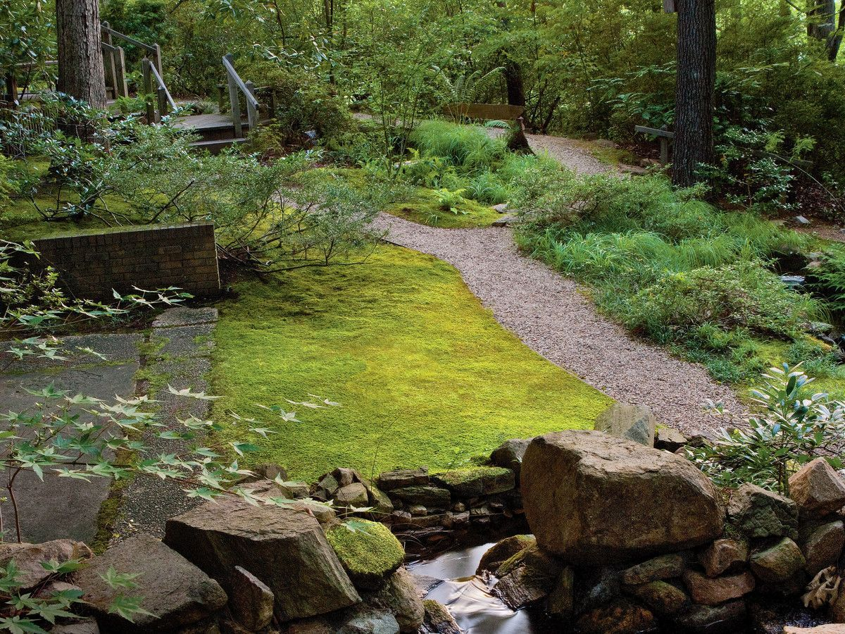 Plant a Moss Lawn is part of lawn Design Modern - Where a lawn won't grow, plant moss—no mowing, no fussing, no problem