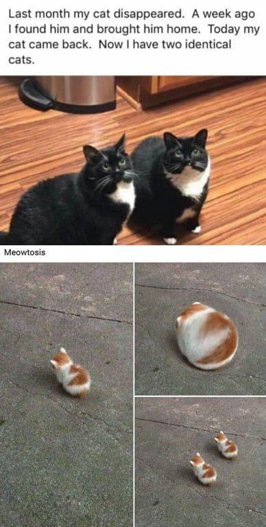 Meowtosis