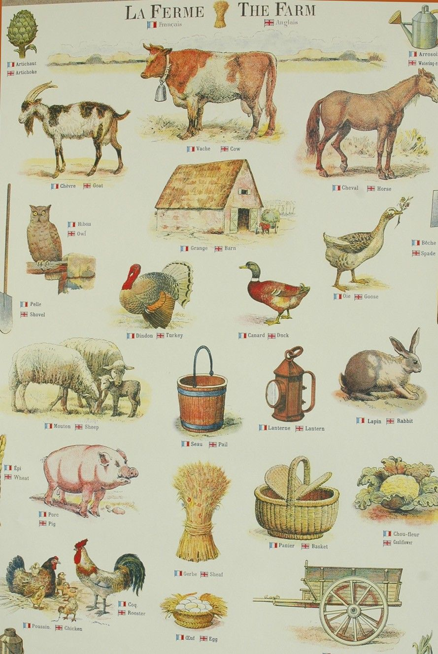 Farm Staples In English And French
