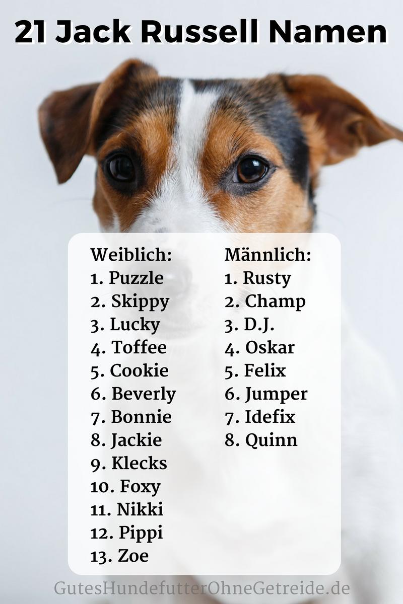 21 schöne Jack Russell Namen, für Weibchen und Rüden mit